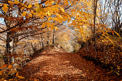 Fall (Gocha Nemsadze) Tags: fall canon canoneos80d canonefs1018mmf4556isstm gochanemsadze nature colors