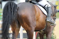 _MG_6211 (dreiwn) Tags: ridingarena reitturnier reiten reitplatz reitverein reitsport ridingclub equestrian showjumping springreiten horse horseback horseriding horseshow pferdesport pferd pony pferde tamronsp70200f28divcusd