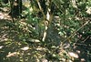 C045493-R1-21-34 (@sunJTF PHOTO) Tags: zealandia wellington nz newzealand green nature fujifilm canon eos50