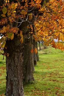 Autumn Change_9990_