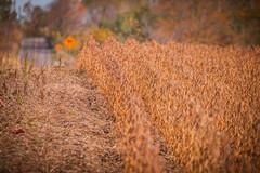 The Edge (A Great Capture) Tags: scarborough autumn fall toronto rows rural farm field agreatcapture agc wwwagreatcapturecom adjm ash2276 ashleylduffus ald mobilejay jamesmitchell on ontario canada canadian photographer northamerica torontoexplore automne herbst 2017