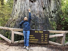 BigTree.UditP (redwoodcoaster) Tags: humboldt redwoods redwood coast national park travel california eurekaca