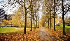 (farmspeedracer) Tags: autumn fall town city saturday building scenery foliage silence isolation loneliness architecture 1970s 1960s 70s 60s park path november