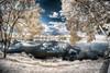 Infrared 720nm (Jefferson Allan - Photographer) Tags: jeffersonallan paisagens hdr arvores campinas superfoto fotografia