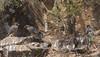 peregrine falcon (Falco peregrinus)-4294 (rawshorty) Tags: rawshorty birds canberra australia act