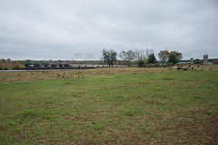 Run-Through (ajketh) Tags: ns norfolk southern ge general electric field farm cows knox sc south carolina lc lancaster chester springmaid line freight train railroad cloudy circle s bascomville d940cw d840cw