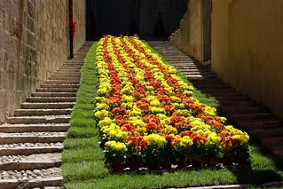 Temps de flors_0122