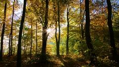 Tremendous (Daphne-8) Tags: landscape landschaft landschap paesaggio panorama paysage paisaje trees bäume bomen arbres arboles colours colors farben colores forest wald woud bosque woods autumn autumne otoño otonho herbst herfst light licht lumière luce luz soleil sonne sun zon sol wood