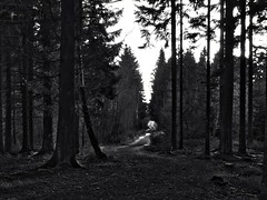 Chemin vers Golonfa (Zoom) du Rond-chêne (RenaudWarnotte) Tags: foret hdr