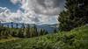 Champ de fougères (L'Teigneux) Tags: alsace vosges arbre ciel landscape montagne nuages paysage randonnée fougères moutains landscapes forêt forest