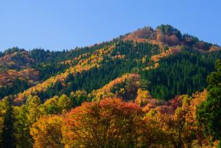 Autumn leaves of Aizu #6