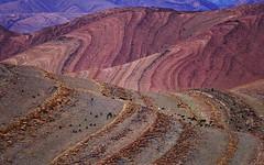 Goats 13 (orientalizing) Tags: antiatlas colorful desert desktop featured goats herding imitek landscape morocco rockformations rocky striations