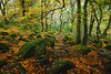 The Gorge III (J C Mills Photography) Tags: derbyshire padley gorge landscape autumn fall trees woodland rocks boulders moss leaves