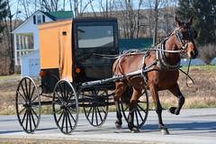 Klip Klop. New Wilmington, PA (bobchesarek) Tags: amish buggy horse road travel padutch pennsylvania