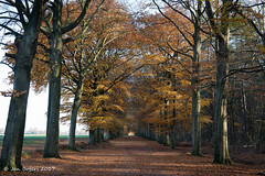 Wouwse Plantage (Jan Bogers) Tags: wouwseplantage janbogers d800 2470 nikon nikkor bos forest forêt herfst automnale automne autumn fall wood beukenboom beuk hêtre beech trees arbre arbres roosendaal pindorp