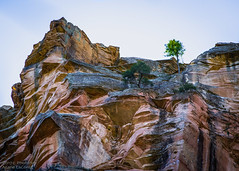West Fork, Coconino National Forest (PhotoArtMarie) Tags: cliff forest rock tree sky brown blue westfork coconino
