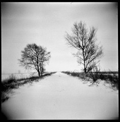 Snowed country road (Foide) Tags: holga countryroad snow trees winter bw