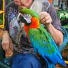 Key West (Florida) Trip 2016 0554Ri sq (edgarandron - Busy!) Tags: florida keys floridakeys keywest bird birds macaw macaws nancyforrester nancyforresterssecretgarden secretgarden