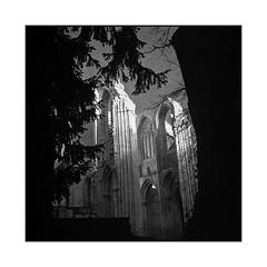 treasure • saint wandrille, normandy • 2016 (lem's) Tags: treasure tresor ruin ruine forest foret abbey abbaye saint wandrille normandy normandie rolleiflex t