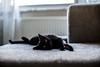 Her name is Zeytin (yAvuz.kaya) Tags: noctilux leica cat zeytin 50mm leicamp leicam kedi f095 lovely