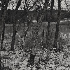 Impression (Stefano Rugolo) Tags: stefanorugolo pentax k5 kepcorautowideanglemc28mm128 squarefomat monochrome impression snow blackandwhite tree countryside hälsingland sweden sverige abstract