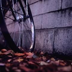 Condor (Yosh the Fishhead) Tags: rollei rolleiflex rolleiflexautomat rolleiflexautomatmx carlzeiss carlzeissjena tessar carlzeissjenatessar carlzeissjenatessar75mmf35 film filmphotography slidefilm squareformat 6x6 mediumformat bike bicycle dof bokeh wheel autumnleaves autumn wire twinlensreflex tlr square