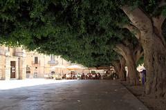 Sicilia, Noto (Mattia Camellini) Tags: sicilia sicily alberi tree italia italy canoneos7d canonefs18135mmf3556is mattiacamellini