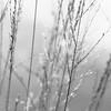 moorland grasses (vertblu) Tags: grasses grass moorland moor onthemoor bw mono lowcontrast dof blur blurred blurry lightgrey delicacy delicate culms vertblu bsquare 500x500 kwadrat lines linien tilted schräg