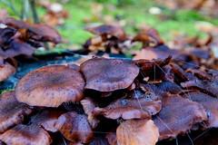 Down low (Steenjep) Tags: silkeborg sø lake efterår fall autumn skov forest løv leaf fungi svamp
