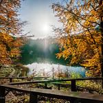 the last rays of autumn.jpg thumbnail