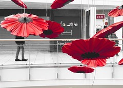 ShotOnIphone Metrocentre Flower Red Petal Day Flower Head Fragility Real People Shopping Center Beauty In Nature Built Structure Architecture Building Exterior Indoors  Hibiscus Freshness Nature Shotoniphone8plus IPhoneography The Week On EyeEm IPhone Bla (Millerc1980) Tags: shotoniphone metrocentre flower red petal day flowerhead fragility realpeople shoppingcenter beautyinnature builtstructure architecture buildingexterior indoors hibiscus freshness nature shotoniphone8plus iphoneography theweekoneyeem iphone blackwhiteandred poppies poppie