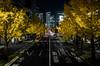 Sakura-Dori, Marunouchi 1-chome, Nagoya (kinpi3) Tags: 名古屋 japan nagoya night cityscape sakuradori autumn autumnleaves