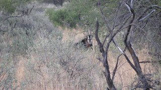 Namibia Hunting Safari 31