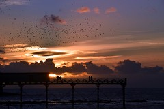 Starlings overhead as the sun sets (karen leah) Tags: aberystwyth ceredigion wales twilight dusk sunset sea water sky clouds pier