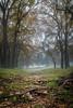 Mission Hills Ranch-43-Edit-Edit (Red5Photo.com) Tags: deer morning nature newbraunfels stag trees wildlife