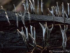 handen omhoog (Marjon van der Vegt) Tags: natuur clingsebossen herfst paddenstoelen kleuren bladeren bomen wolken boerderij