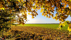 Beautiful memories (++sepp++) Tags: herbst landscape landschaft landschaftsfotografie autumn fall laub foliage bäume tree gegenlicht backlight backlit lechfeld bayern bavaria deutschland germany potofgold