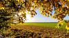 Beautiful memories (++sepp++) Tags: herbst landscape landschaft landschaftsfotografie autumn fall laub foliage bäume tree gegenlicht backlight backlit lechfeld bayern bavaria deutschland germany potofgold