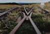 rails   l   2017 (weddelbrooklyn) Tags: himmelmoor quickborn moor natur nikon d5200 35mm nature schienen rails bahnschienen railway moorbahn gleise hund dog hunde dogs