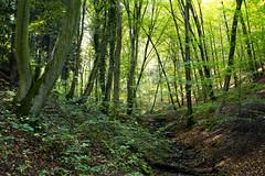 Wald in Solingen-Schaberg (kalakeli) Tags: bergischesland wunderschönesnrw wälderinnordhreinwestfalen forests wälder schabergerwald solingen oktober october 2017 green grün