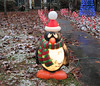 I didn't expect it to snow in South Louisiana... I think I'll move to Florida (Monceau) Tags: penguin sad christmas outside display lit snow unexpected funny chagrin