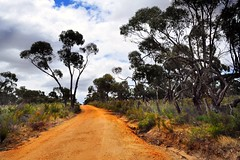 Down the Road, to Nowhere (holly hop) Tags: australia gumtrees trees bush bassord centralvictoria dirtroad dirt eucalyptus scrub forest native nature outdoors tree
