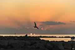Calentando las  alas (susocl1960) Tags: amanecer naranja mar aire