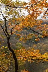 Fall in Ontario (A blond-Tess) Tags: ontario canada autumncolours autumn tree fall conservationarea greenvillecanada