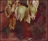 Yukka yuk day (Diana Thorold.) Tags: dianathorold psp 2017 flickr texture flamingpear interesting art manipulate magicunicornverybest ie awardtree