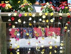 388 - Chute de fleurs (AnouchkA_) Tags: anouchka croatia travel amateur split flower water wish multicolor nature fall 388