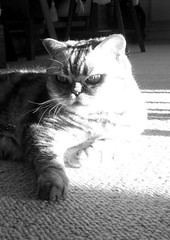 Overexposed cat in B&W (Jaedde & Sis) Tags: moonshade expose contrast light