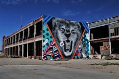 Detroit Lion (Jan Nagalski (off for awhile)) Tags: mural art publicart streetart warehouse abandoned derelict decay lion cartoon blue bluesky muralsinthemarket artproject blueeyes detroitlions easternmarket detroit michigan jannagalski jannagal destruction urban city abandonedbuilding abandonedplaces