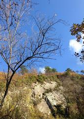 33 (emmess2) Tags: campiglia cinqueterre spezia autumn fall leaves