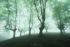 The marching trees (Mimadeo) Tags: forest bright tree trees fog mist fantasy spring misty mystery landscape light sunlight green evening darkness magic mood foggy spooky woods scary silhouette gloomy enchanted mysterious surreal trunk